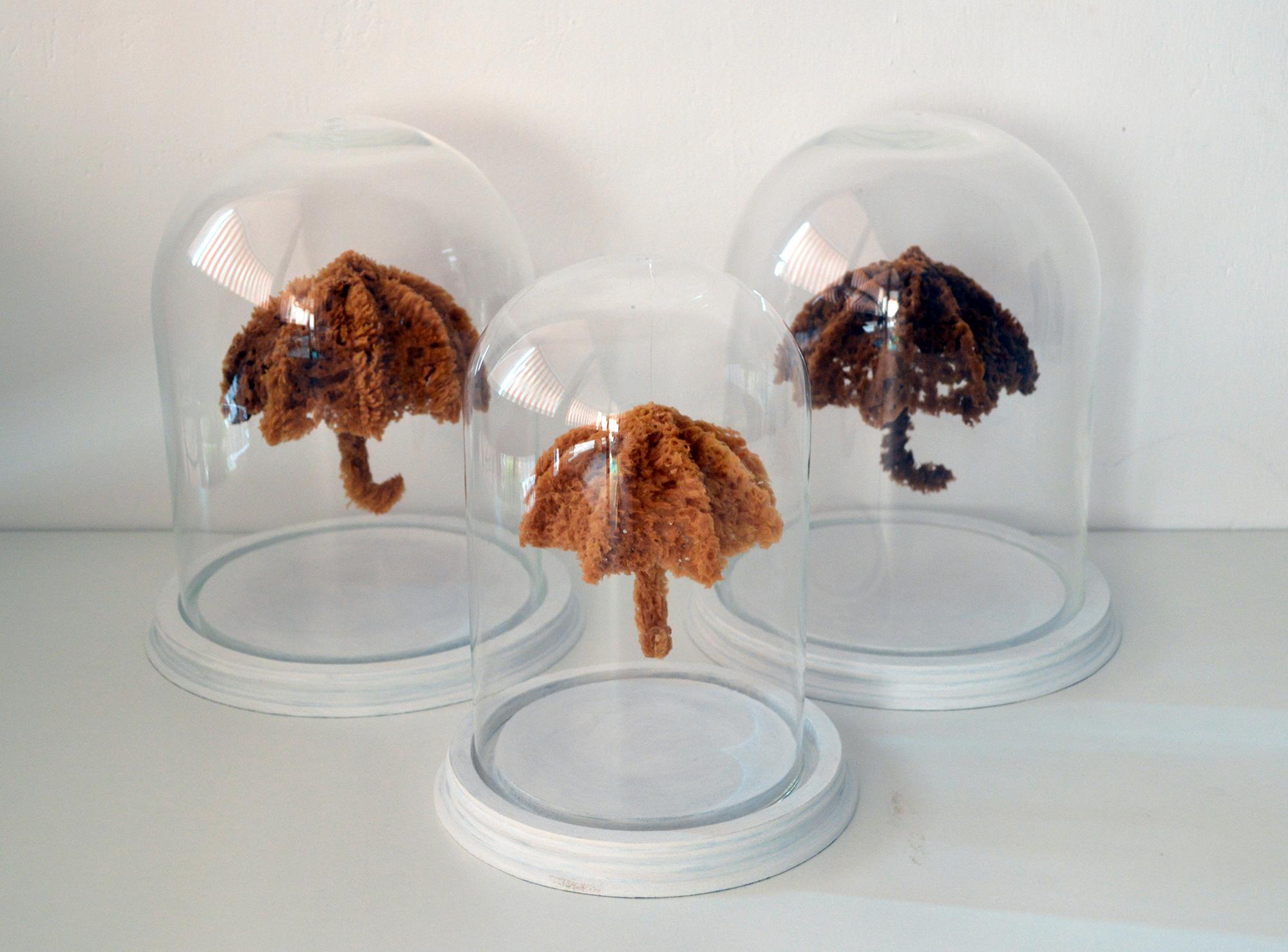 <i>Spongia crisis ou les éponges de pluie</i>, 3 pièces