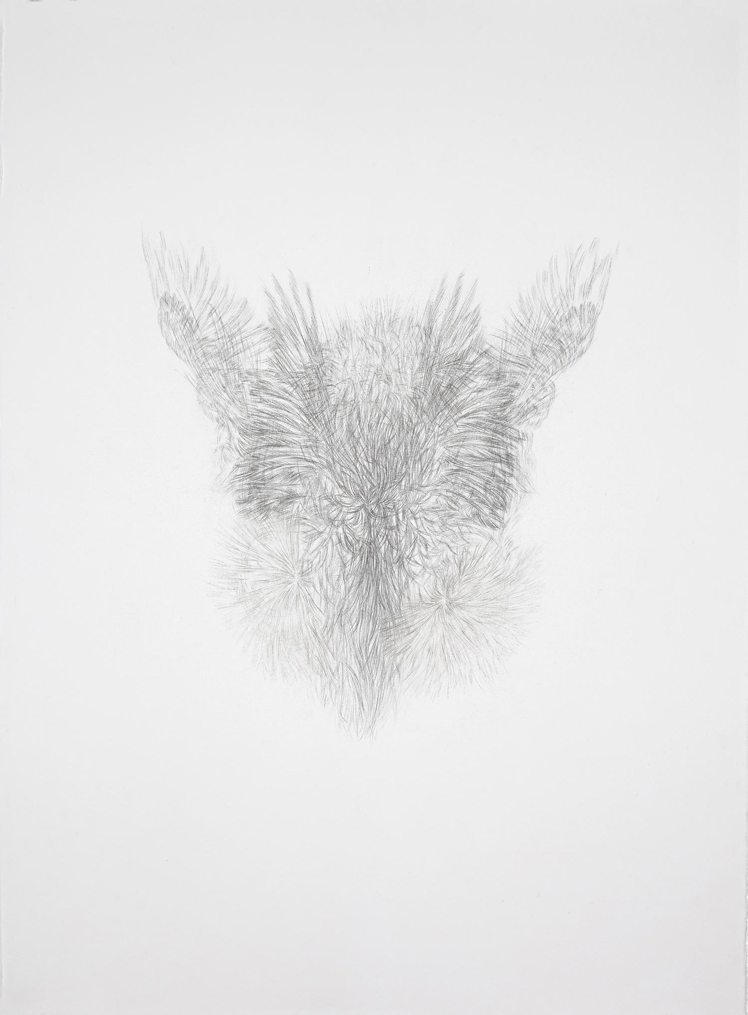 <i>derrière les secrets</i>, 2016, graphite, 76x56cm