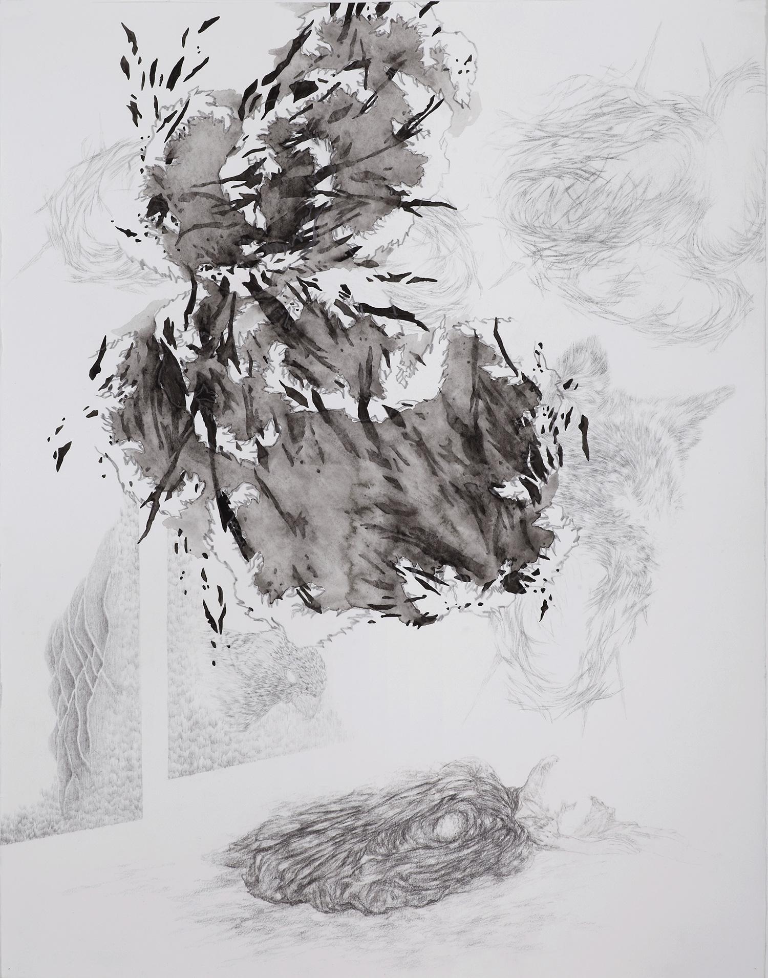<i>Nids de la robe</i>, 2014, graphite et lavis, 80x60cm