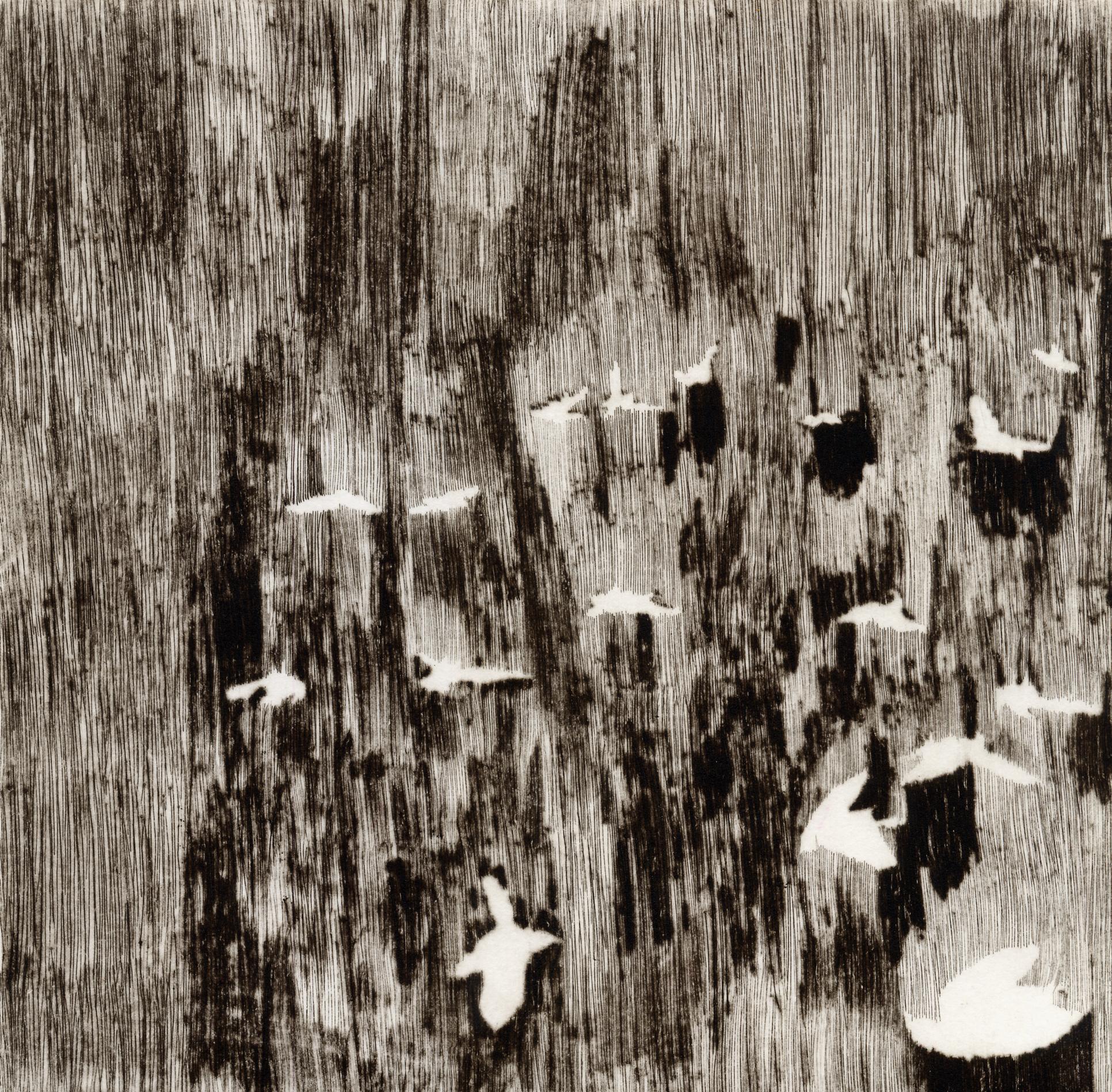 <i>les oiseaux</i>, 2008, pointe sèche, 24x25cm