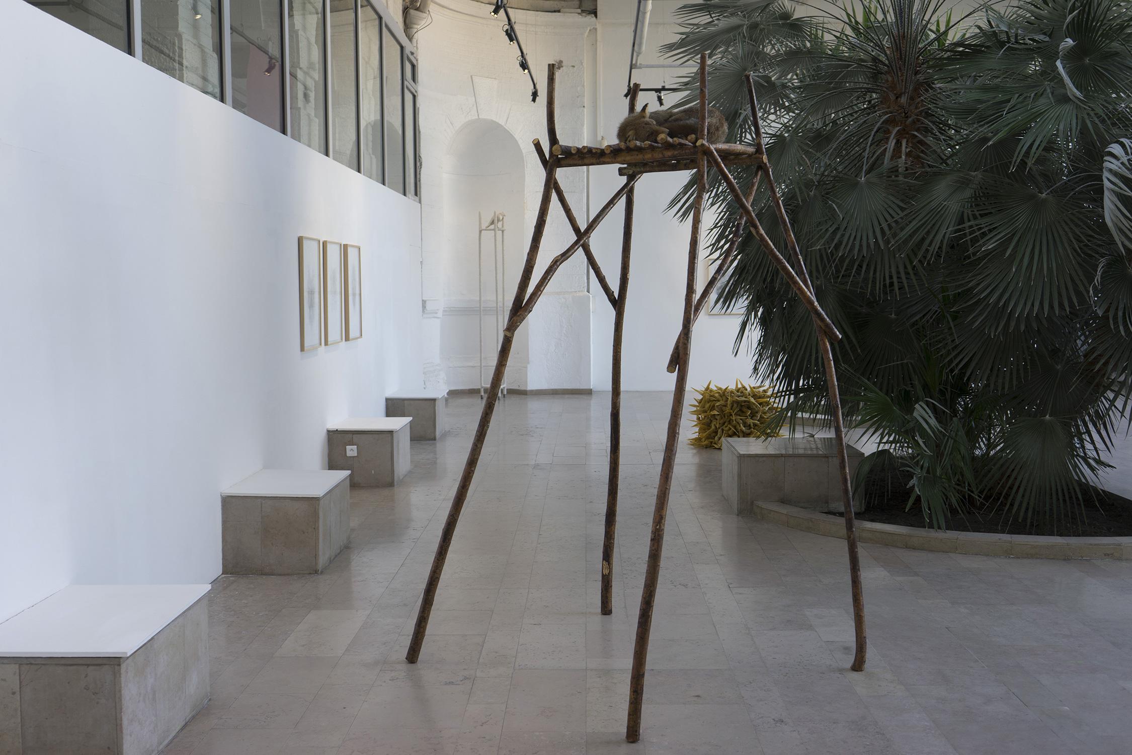 <i>sans titre</i>, 2018, sculpture/installation, bois de saule, renard naturalisé, cire d'abeille,  250x130x150 cm