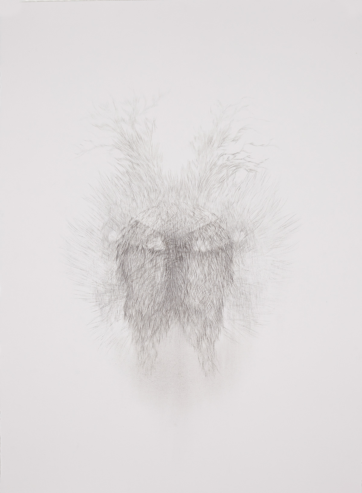 <i>Derrière les secrets (souche)</i>, 2016, graphite, 80x60cm